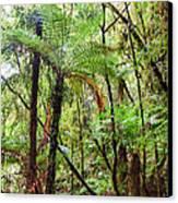Native Bush Canvas Print by MotHaiBaPhoto Prints