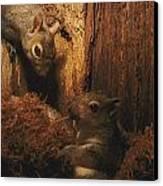 A A Baby Eastern Gray Squirrel Sciurus Canvas Print