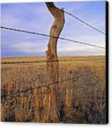A Barbed Wire Fence Stretches Canvas Print by Gordon Wiltsie