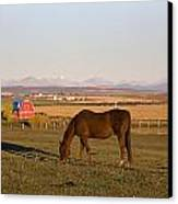 A Brown Horse Grazing In A Field In Canvas Print by Michael Interisano