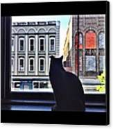 A Cat's View Canvas Print by Joan Meyland
