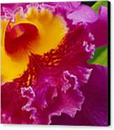 A Close View Of A Bright Pink Cattleya Canvas Print by Jonathan Blair
