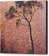 A Desert Bloodwood Tree Against The Red Canvas Print by Jason Edwards