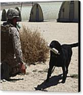 A Dog Handler Calls Over A Black Canvas Print by Stocktrek Images