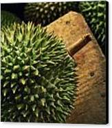 A Durian Fruit - Popular In South East Canvas Print by Justin Guariglia