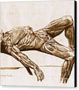A Flayed Cadaver Canvas Print