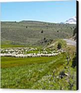 A Flock Of Sheep 2 Canvas Print