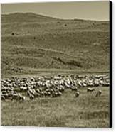 A Flock Of Sheep 4 Canvas Print by Philip Tolok