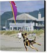 A German Shepherd Leaps For A Kite Canvas Print