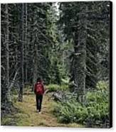 A Lone Hiker Enjoys A Wooded Trail Canvas Print by Tim Laman