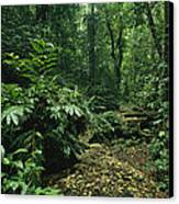 A Lush Woodland View In Papua New Canvas Print by Klaus Nigge