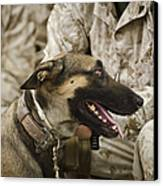 A Military Working Dog Sits At The Feet Canvas Print by Stocktrek Images