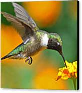 A Nice Hummer Canvas Print by Jessie Dickson