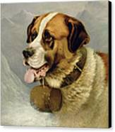 A Portrait Of A St. Bernard Canvas Print by James E Bourhill