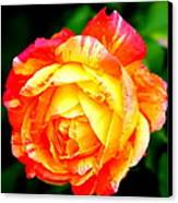 A Rose Canvas Print by Jose Lopez
