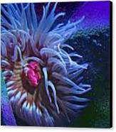 A Sea Anemone Canvas Print