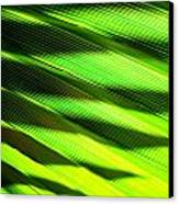 A Shadow Of A Palmfrond On A Palmfrond Canvas Print by Catherine Natalia  Roche