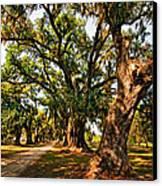 A Southern Stroll Canvas Print by Steve Harrington