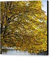 A Tree With Golden Leaves And A Park Canvas Print by John Short