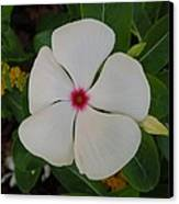 A White Star With A Red Center Canvas Print by Chad and Stacey Hall