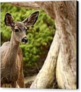 A Young Deer In A Grove Of Rare Canvas Print by Charles Kogod