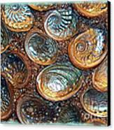 Abalones Canvas Print by Judi Bagwell