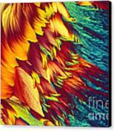 Adenosine Triphosphate Canvas Print by Michael W. Davidson
