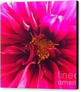 Adorable Flora  Canvas Print