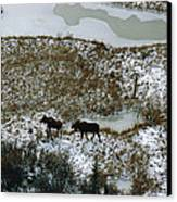 Aerial Of A Male And Female Moose Canvas Print by Norbert Rosing
