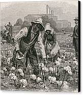 African Americans Pick Cotton Canvas Print by Everett