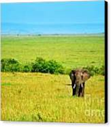 African Elephant In The Wild Canvas Print