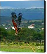 African Fish Eagle Flying Canvas Print by Anna Om