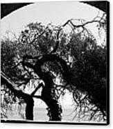 Alcatraz Tree Canvas Print by Ty Helbach
