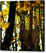 Alert Doe Canvas Print by Scott Hovind