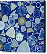 Algae, Fossil Diatoms, Lm Canvas Print by M. I. Walker