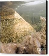 Algae In A Frozen Pond Canvas Print by Ted Kinsman