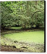 Algal Bloom In Pond Canvas Print by Michael Marten