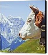 Alpine Cow Canvas Print by Greg Stechishin