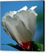 Althea Flower Canvas Print