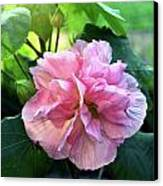Althea Rose Of Sharon Canvas Print by Kevin Smith