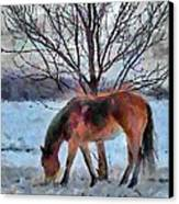 American Paint In Winter Canvas Print by Jeff Kolker