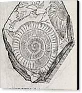 Ammonite Fossil, 16th Century Canvas Print