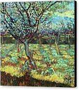 Apricot Trees In Blossom Canvas Print by Pg Reproductions