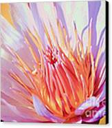 Aquatic Bloom Canvas Print by Julie Palencia