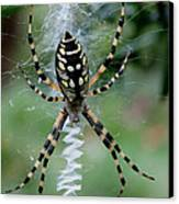 Argiope Aurantia Canvas Print by Sean Green