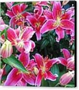 Asiatic Lillies Canvas Print by Randall Weidner