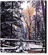 Aspen In Snow Canvas Print by Barry Shaffer