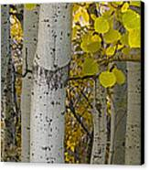Aspen Panorama Canvas Print by Andrew Soundarajan