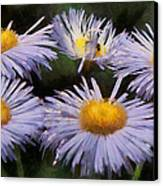 Asters Painterly Canvas Print by Ernie Echols