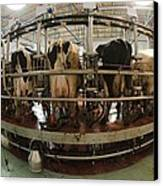 Automatic Milking Machine Canvas Print by Photostock-israel